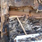 Carpenter ants are common here in the Portland area and destroy structural support studs under siding.