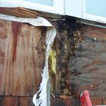 even true CDX plywood will rot after a long enough time of moisture intrusion - in Beaverton