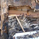 In the northwest there aren't many termites. Our problem is with carpenter ants. They eat & nest in soft moist wood.